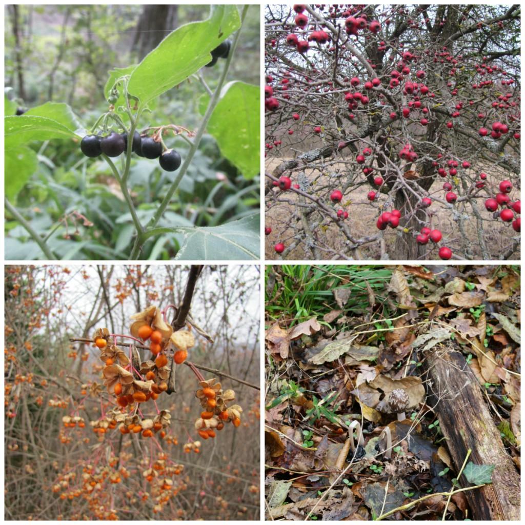 biodiversity examples