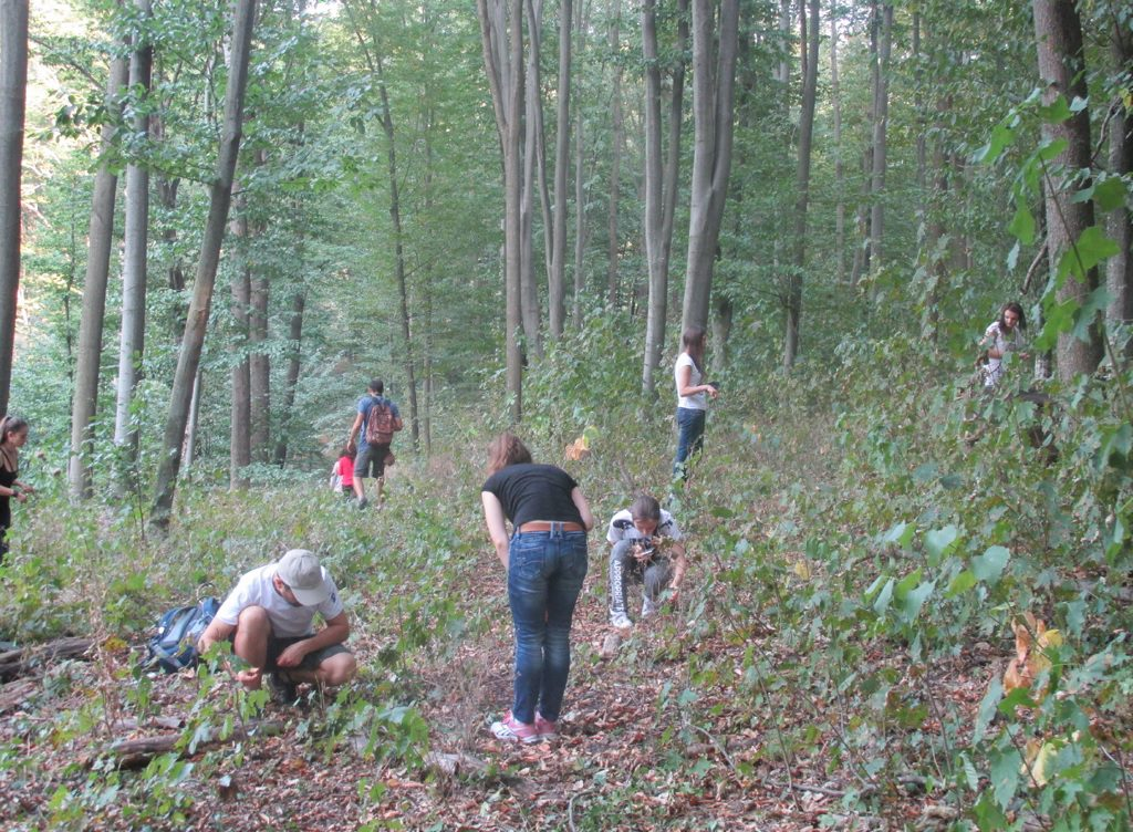 Participants of the Codru Quest project exploring biodiversity in the Codru forest.